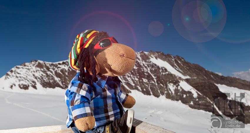 Mit Schaf Paul in der Schweiz