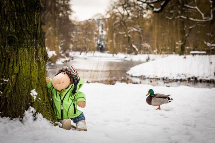 Schaf Paul am Weiher im Schnee