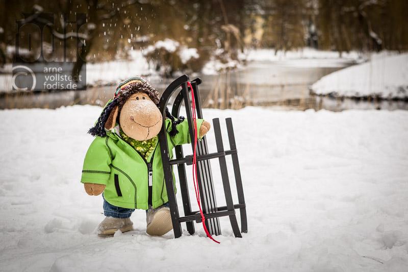 Schaf Paul im Schnee