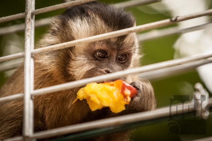 Affenlecker in der Wildtierhilfe Fiel